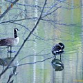 Two Geese On A Lake by Ruth Yvonne Ash