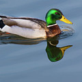 Two Headed Duck by John Benedict