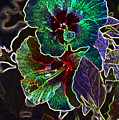 Two Hibiscus Glowing Edges Abstract by Linda Brody