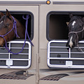 Two Horses Are Ready To Travel by Joel Sartore