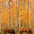 Two Horses Grazing In The Autumn Air by James BO  Insogna