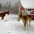 Two Horses In Winter by Eleanor Bortnick