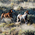 Two Horses Running by JOANNE McCubrey