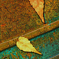 Two Leaves Or Not Two Leaves by Paul Wear