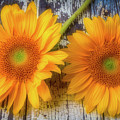 Two Lovely Sunflowers by Garry Gay