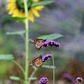 Two Monarch Butterflies And Sunflower 2011 by Karen Adams