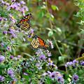 Two Monarchs by Edward Sobuta