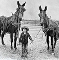 Two Mules For Sister Evelyn by Daniel Adams