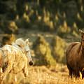 Two Mustangs Post Playtime At The Waterhole by Belinda Greb