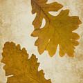 Two Oak Leaves  by Bernice Williams