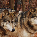 Two Of A Kind by Lori Tambakis