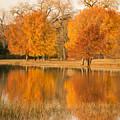 Two Orange Trees by Iris Greenwell