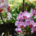 Two Orchid Branches Number One by Heather Kirk
