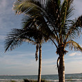 Two Palms And The Gulf Of Mexico by Susanne Van Hulst