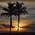 Two Palms At Dawn 18222 by Anna Gibson