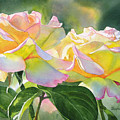 Two Peace Rose Blossoms by Sharon Freeman
