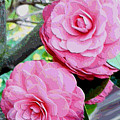 Two Pink Camellias - Digital Art by Carol Groenen