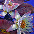 Two Pink Water Lilies by John Lautermilch