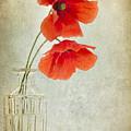 Two Poppies In A Glass Vase by Ann Garrett