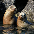 Two Quiet Sea Lions by Susan Wiedmann