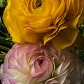 Two Ranunculus by Garry Gay