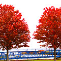 Two Red Trees by Victory  Designs