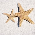 Two Starfish On The White Sand by Holly Eads