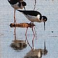 Two Stilts Walk The Pond by Tom Janca