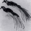Two Studies Of A Bird Of Paradise 1630 by Remington Frederic