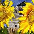 Two Sunflowers by Donald  Erickson