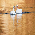 Two Swans On Gold by Alexander Kunz