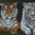 Two Tigers Oil Painting by Natalja Picugina
