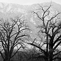 Two Trees Flatirons Boulder Colorado by James BO  Insogna