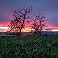 Two Trees In A Purple Sunset by Brad Stinson