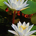 Two Water Lilies 004 by George Bostian