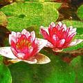 Two Waterlily Flower by Jeelan Clark