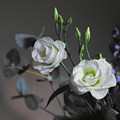 Two White Roses by Jeremy Hayden
