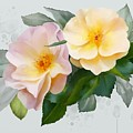 Two Wild Roses by Ivana Westin