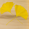 Two Yellow Leaves by Heather Strazza