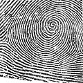 Typical Whorl Pattern In 1900 by Science Source