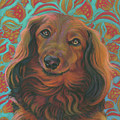 Long-haired Dachshund by Jane Oriel