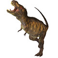 Tyrannosaurus Rex Profile by Corey Ford