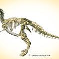 Tyrannosaurus Rex Skeleton by Bob Orsillo