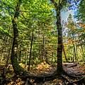 U Shaped Trees Cascade Mountain Ny New York by Toby McGuire