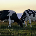 Udderly Delightful by Teresa A and Preston S Cole Photography