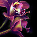 The Painted Orchid by Jessica Jenney
