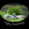 Ugly Duckling by Richard Gibb