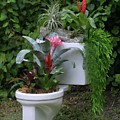 Ultimate Flower Pot by Dodie Ulery