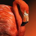 Ultimate Orange by Debi Dalio