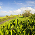 Ulupalakua Country Road by Ron Dahlquist - Printscapes